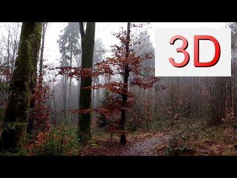 3D Video 4K: DECEMBER FOREST WALK