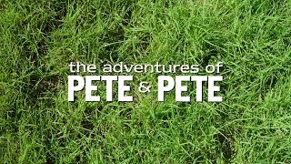 From Pilot to Final Product: The Adventures of Pete & Pete