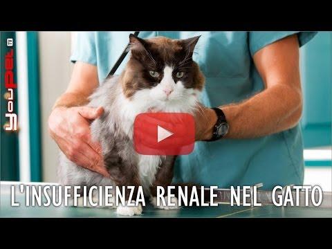 L'insufficienza renale nel gatto