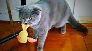 Naughty Cats 😜🐱 Funny Bully Cats (Part 1) [Funny Pets]