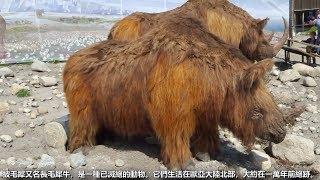 11種可能被復活的滅絕動物