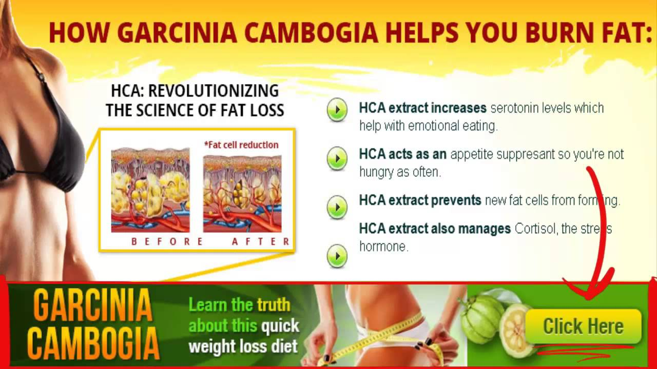 What episode does dr oz talk about garcinia cambogia : The open road