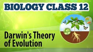 Darwin's Theory of Evolution - Origin and Evolution of Life - Biology Class 12
