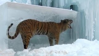 Top 10 Unbelievable Animals Frozen In Time - Preserved Animals In Ancient Ice