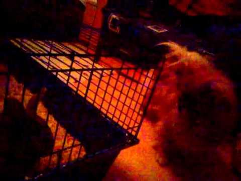 Pacsi dog vs rabbit