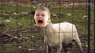 Baby Screaming Goat