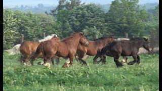 Caii lui Cornel de la Putna, Bucovina - 2018 Merita vazut !!!