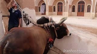 Gav Chah (Cow well) گاو چاه