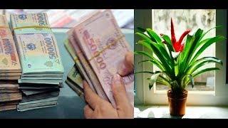 12 Loại Cây Đem Tiền Vào Nhà Theo Tuổi Gia Chủ