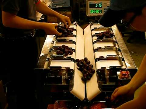 Yamato Scale - Semiautomatic Table-top Dataweigh. Application: Fruits & Vegetables