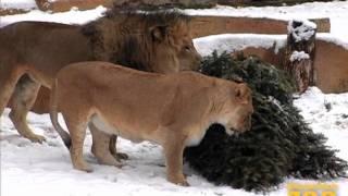 Zoo innevato
