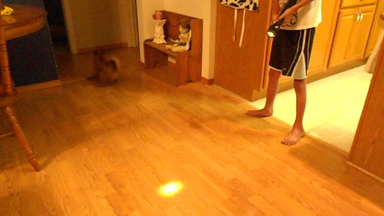 Dog Sliding Accross Floor Funny Youtube