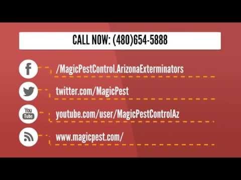 Magic Pest Termite Control Gilbert AZ