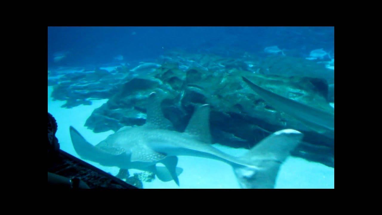 Aquarium Youtube Atlanta Aquarium Youtube 2017 Fish