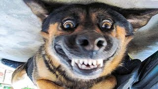 /funniest dogs and cats awesome funny pet animals39 life videos