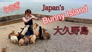Rabbit Island in Japan, Okunoshima | 日本のうさぎ島、大久野島
