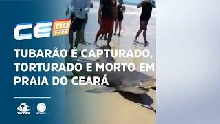 Tubarão é capturado, torturado e morto em praia do Ceará