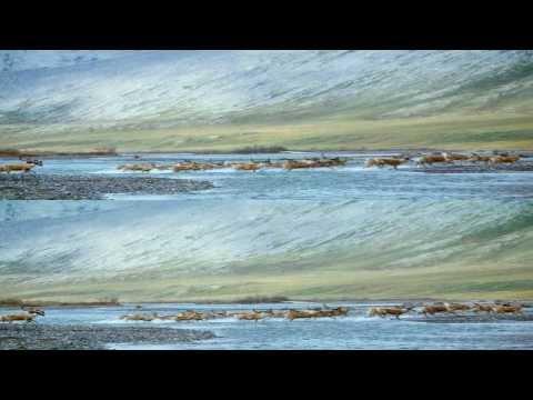 IMAXTo.The.Arctic.2012.1080p.BluRay3D.Half-OU.Rus.Eng