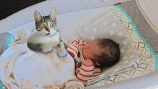 Cat Meeting Newborn Baby First Time - Curious Cat tries to befriend Baby Compilation