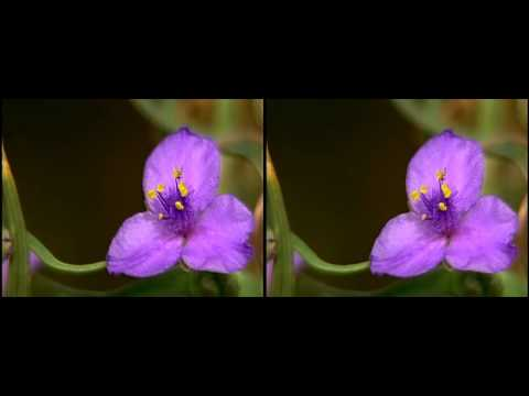Zion National Park yt3d:enable=true HD 3D