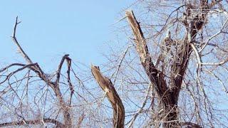 Тысячи деревьев пострадали в результате обрушившейся на край стихии.