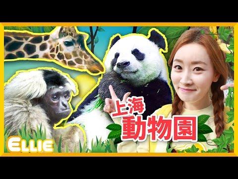 愛麗的上海動物園遊記 |  愛麗和故事  EllieAndStory