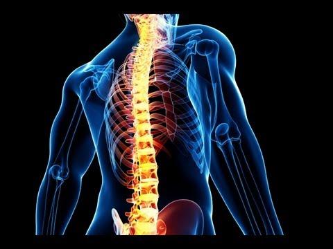 Упражнения для позвоночника. Упражнения для правильной осанки. Упражнения для укрепления спины.