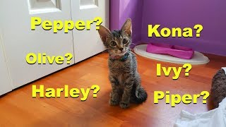 GETTING A KITTEN!!!!      Montage Vlog