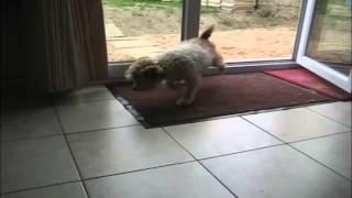 Самая воспитанная собачка в мире
