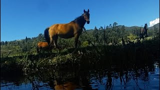 Horse in the meadow relax music, water,  birds, crickets and nature