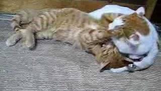 かご猫37