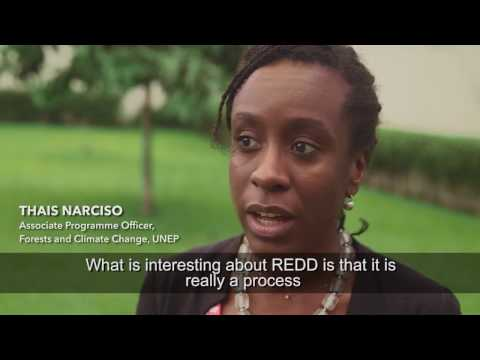 Episode 5: Côte d'Ivoire (REDD+ and the future of African Forests)