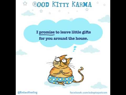 Good Kitty Karma