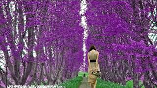 NHỮNG CA KHÚC HAY NHẤT CỦA NHẬT TRƯỜNG TRẦN THIỆN THANH [16 Ca Khúc] -TNP (Super HD Videos)