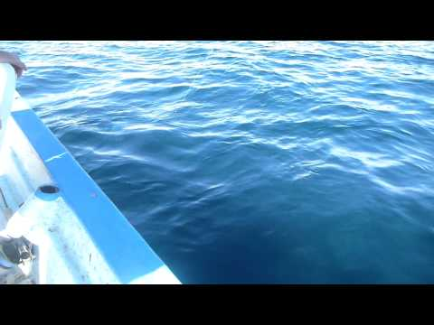 Flyfishing in Bahia de los Suenos