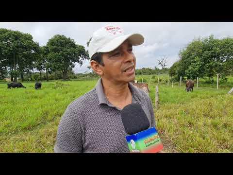 IDAM investe na produção do leite em parintins
