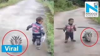 OMG!! Porcupine follows kid, video goes viral..