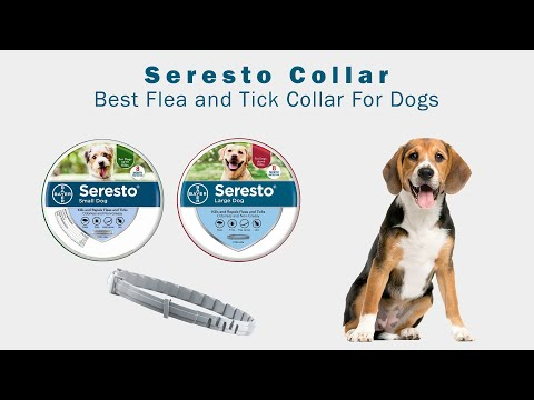 Seresto Collar : Best Flea and Tick Collar For Dogs