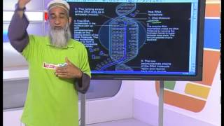 RNA: Structure & Protein Synthesis