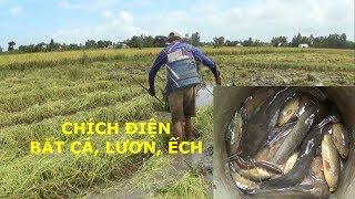 CAO THỦ CHÍCH ĐIỆN BẮT LƯƠN, ẾCH, CÁ Electric fishing, frogs, eels