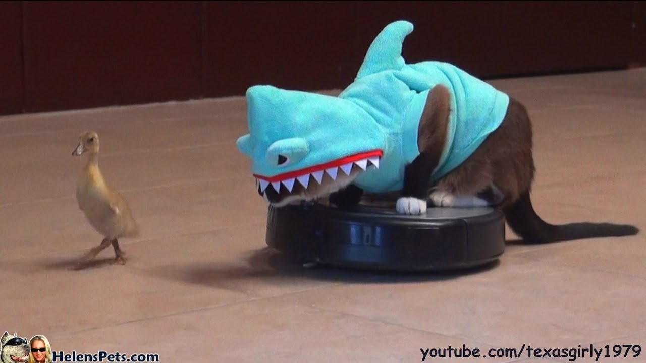 Cat In A Shark Costume Chases A Duck While Riding A Roomba ... - photo#33