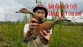 Bẫy gà đồng (bẫy được đàn LE LE- VỊT TRỜI). lưới bẫy chim đêm tổng hợp lh 0965051053