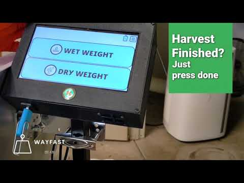 Video of the Wayfast scale in action. Automatically scan Metrc Tags or RFID Tags during the weighing of cannabis plants or products to log associated weights. Use the Canix program to upload this information to state compliance system.
