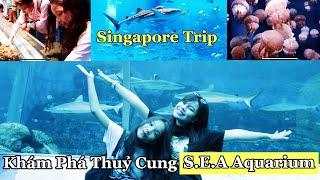 Song Thư Lần Đầu Ngắm Cá Mập Ở THUỶ CUNG NHÂN TẠO LỚN NHẤT THẾ GIỚI (Singapore Trip)