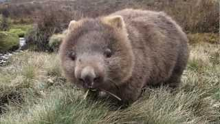 The best Wombat Movie ever been made!!!