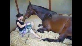 Ngựa người, người ngựa