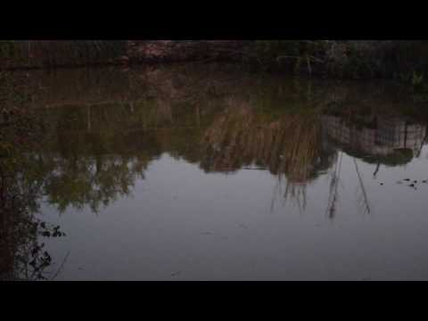 Simfonia de granotes