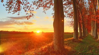 Relaxing Forest Sounds (8D Audio)🍁 4K Autumn Ambience Fall Afternoon🍁 30min meditation for sleepin