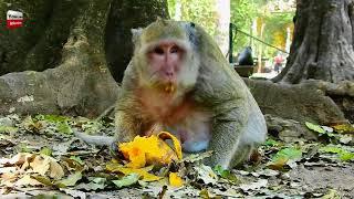 Why Popeye often alone/ Big billy is big baby/ She concern her baby Youlike Monkey 1676