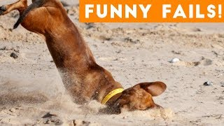Funniest Pet Fails Compilation August 2018   Funny Pet Videos